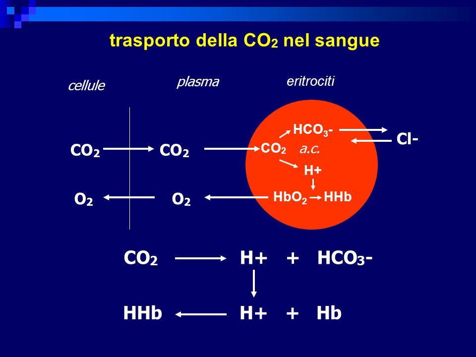 trasporto della CO2 nel sangue