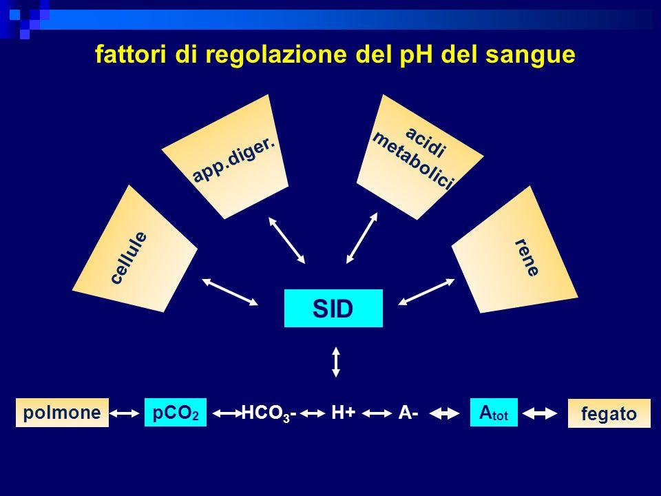 fattori di regolazione del pH del sangue