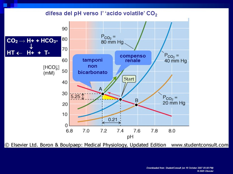 difesa del pH verso l' 'acido volatile' CO2