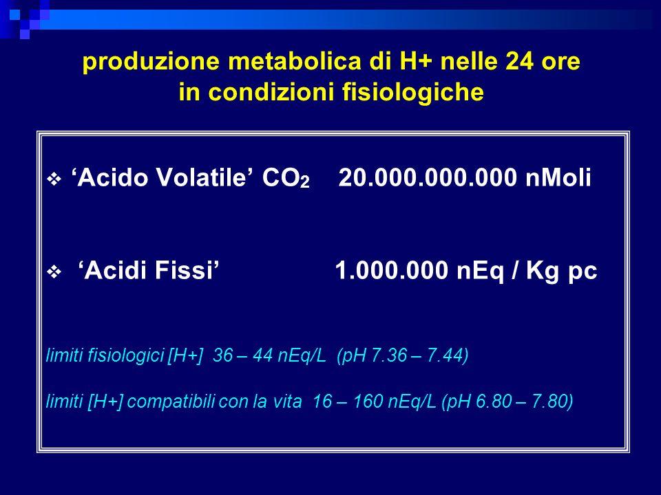 produzione metabolica di H+ nelle 24 ore in condizioni fisiologiche