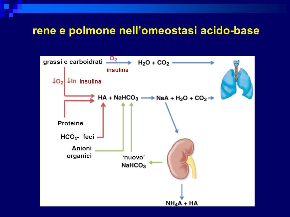 rene e polmone nell'omeostasi acido-base