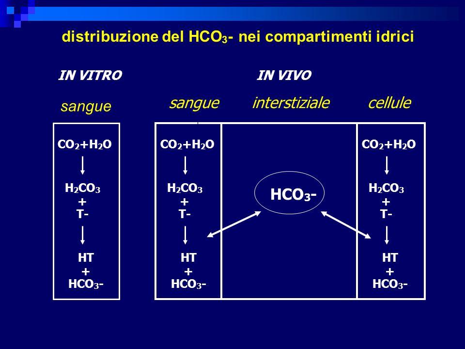 distribuzione del HCO3- nei compartimenti idrici