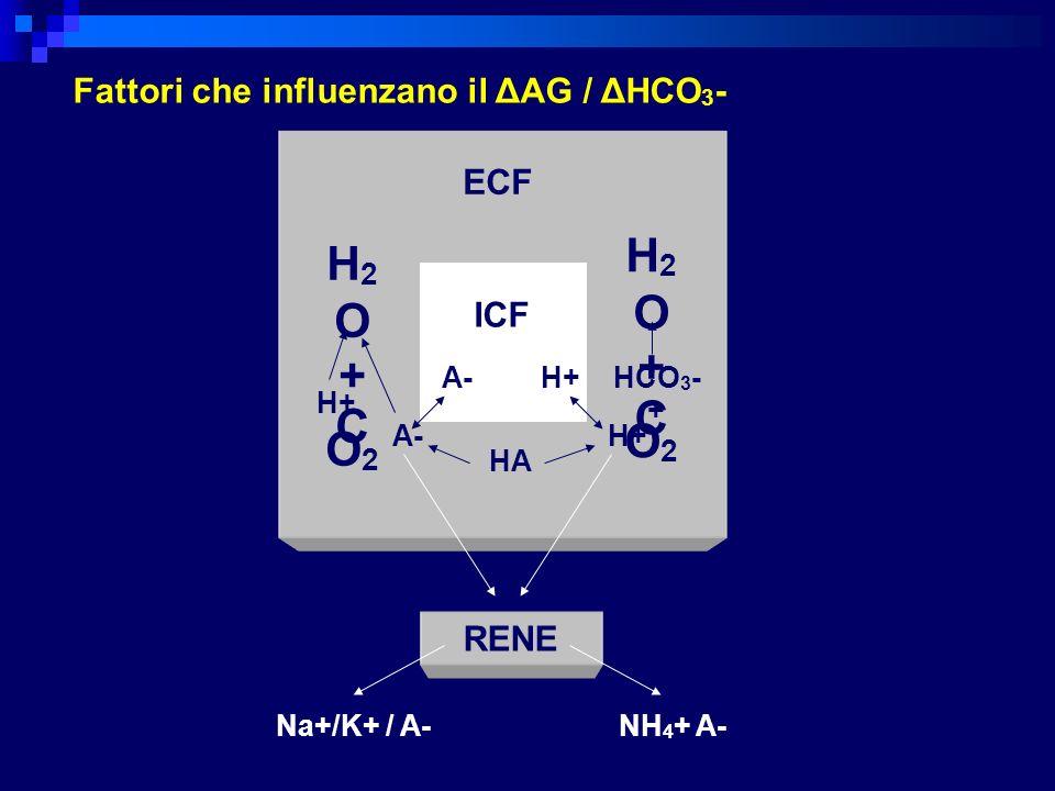 H2O H2O + + CO2 CO2 Fattori che influenzano il ΔAG / ΔHCO3- ECF ICF