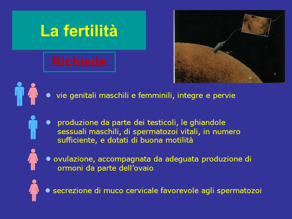 La fertilità Richiede. l vie genitali maschili e femminili, integre e pervie.