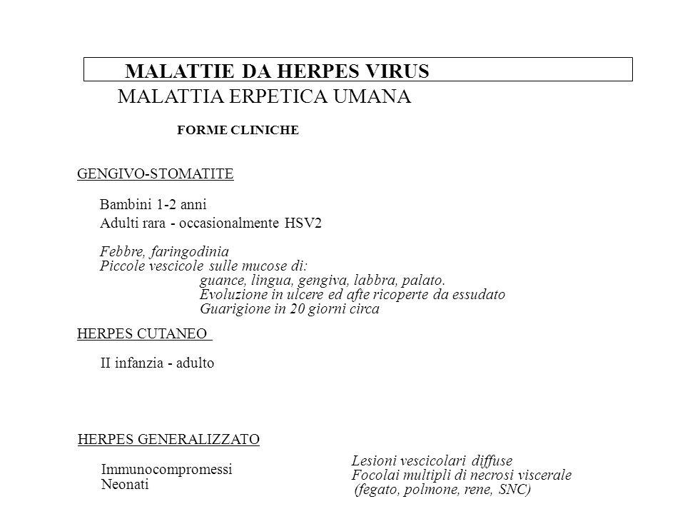 MALATTIE DA HERPES VIRUS MALATTIA ERPETICA UMANA