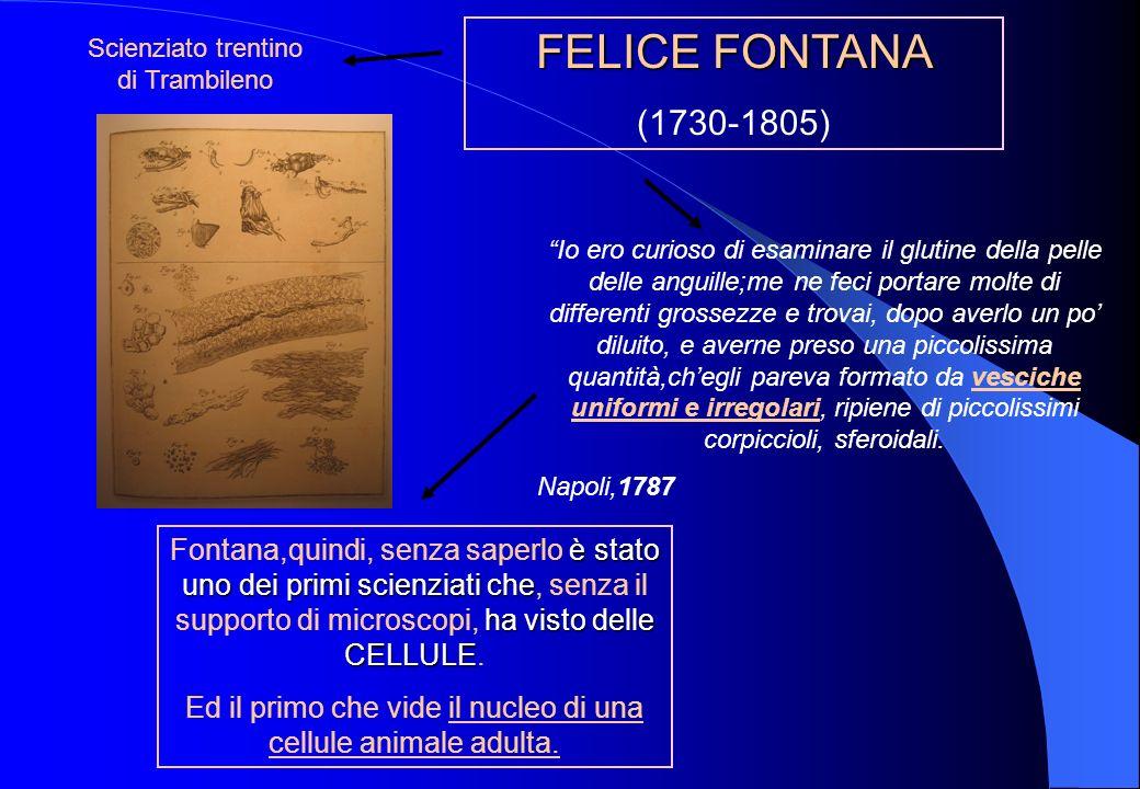 FELICE FONTANA (1730-1805) Scienziato trentino di Trambileno.