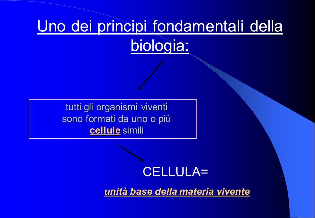 Uno dei principi fondamentali della biologia: