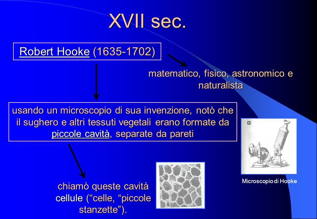 XVII sec. Robert Hooke (1635-1702)