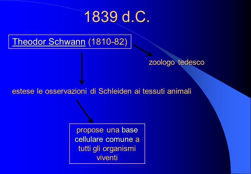 propose una base cellulare comune a tutti gli organismi viventi