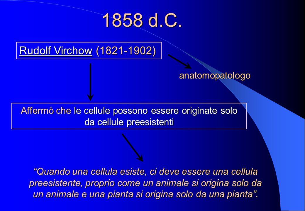 1858 d.C. Rudolf Virchow (1821-1902) anatomopatologo