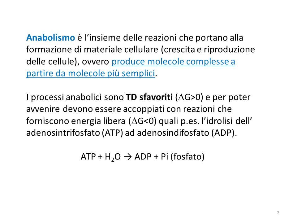 ATP + H2O → ADP + Pi (fosfato)