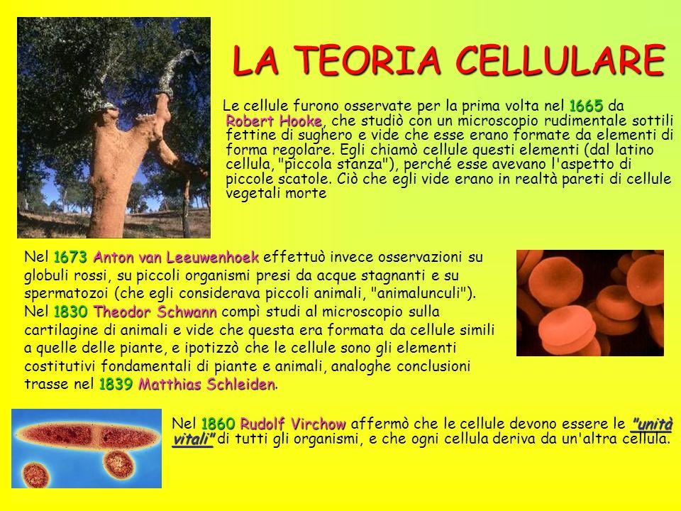 LA TEORIA CELLULARE
