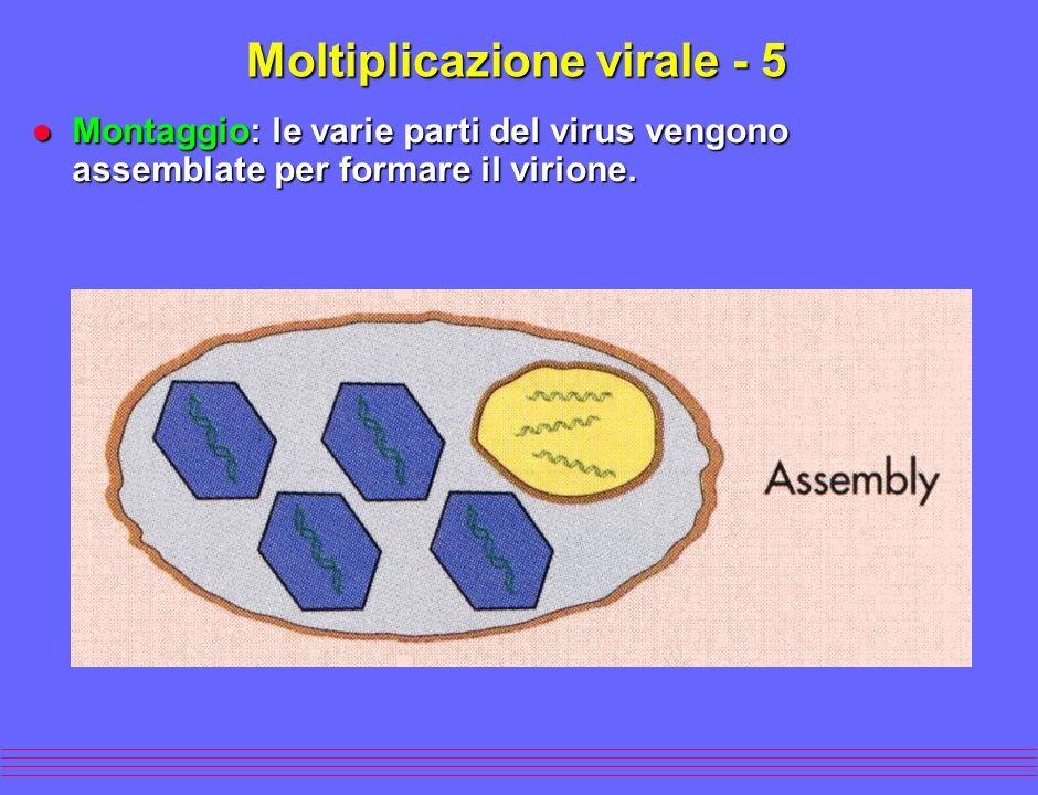 Moltiplicazione virale - 5