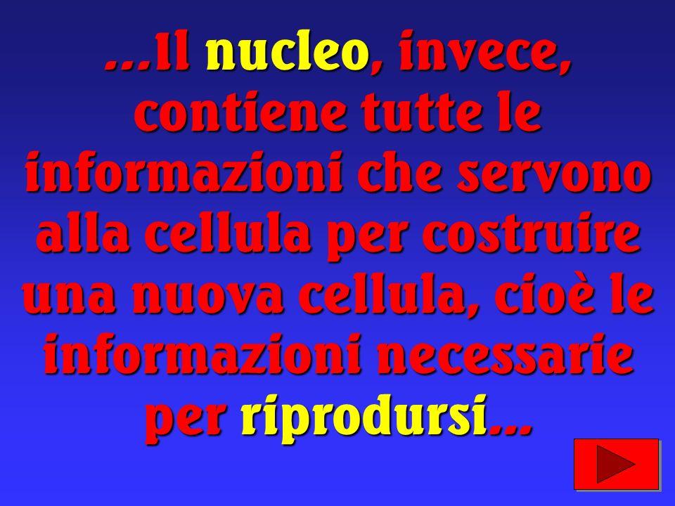 …Il nucleo, invece, contiene tutte le informazioni che servono alla cellula per costruire una nuova cellula, cioè le informazioni necessarie per riprodursi...