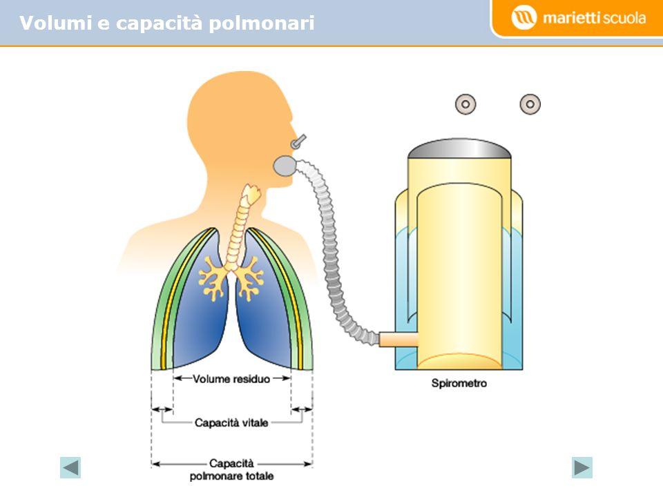 Volumi e capacità polmonari