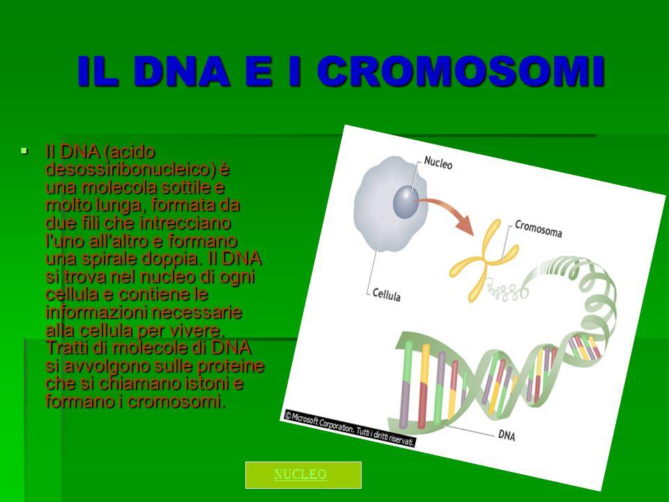 IL DNA E I CROMOSOMI