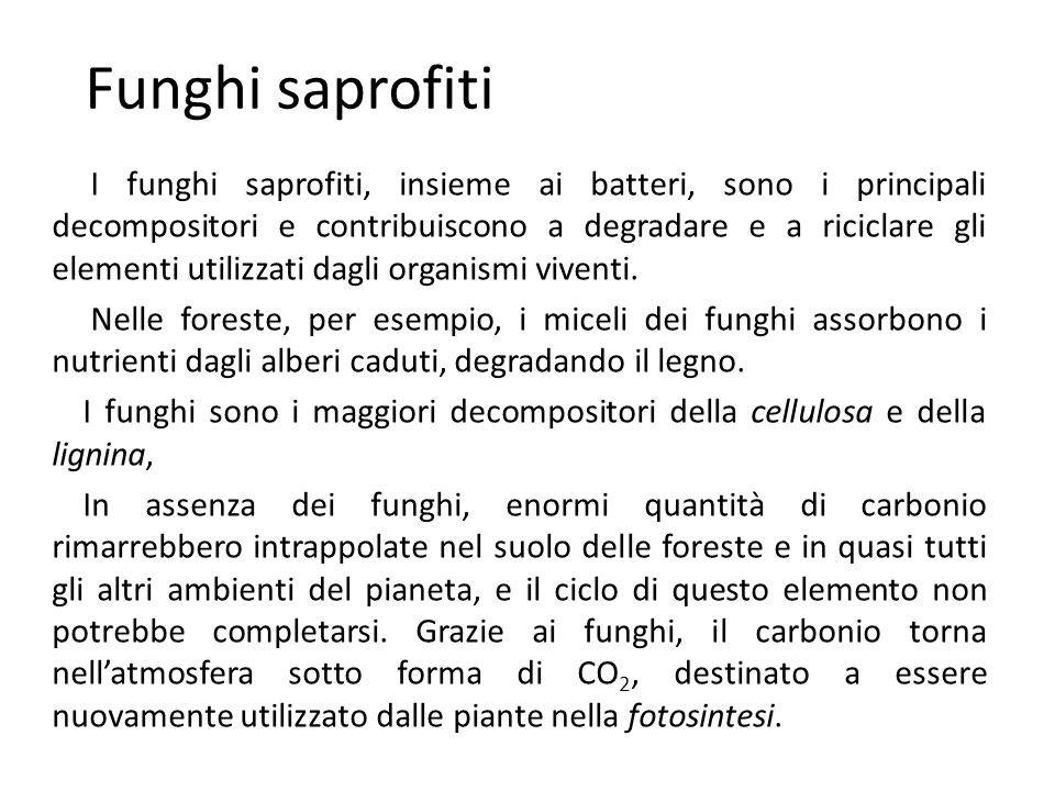 Funghi saprofiti