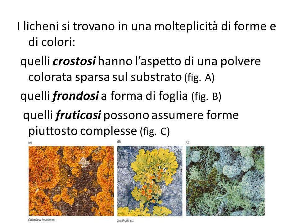 I licheni si trovano in una molteplicità di forme e di colori: