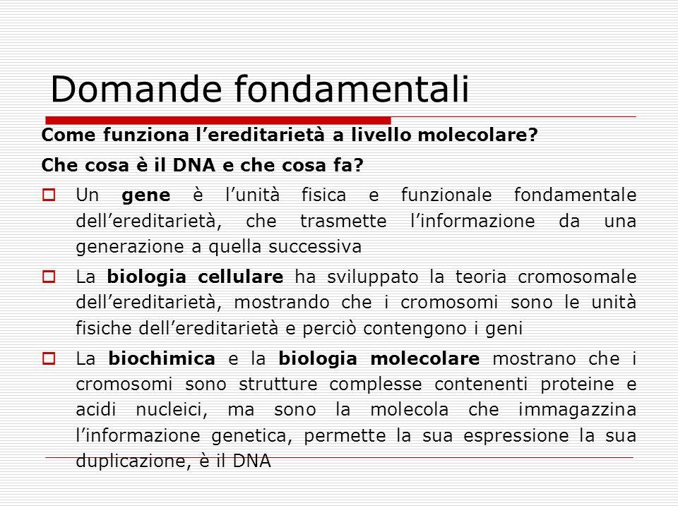 Domande fondamentali Come funziona l'ereditarietà a livello molecolare Che cosa è il DNA e che cosa fa