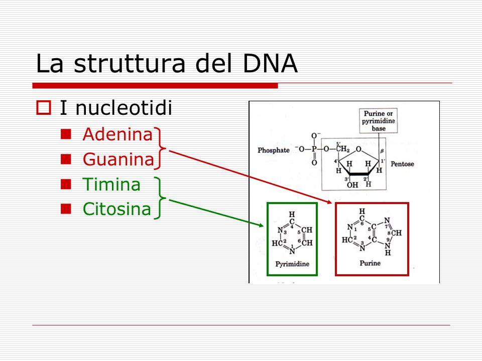 La struttura del DNA I nucleotidi Adenina Guanina Timina Citosina