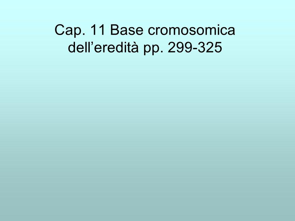 Cap. 11 Base cromosomica dell'eredità pp. 299-325