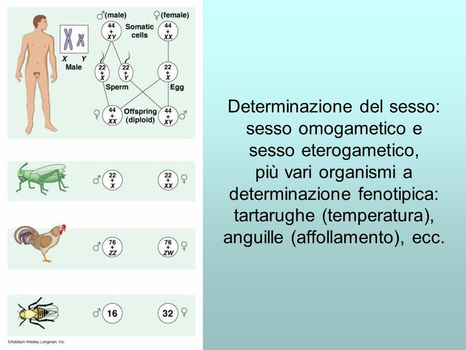 Determinazione del sesso: sesso omogametico e sesso eterogametico, più vari organismi a determinazione fenotipica: tartarughe (temperatura), anguille (affollamento), ecc.
