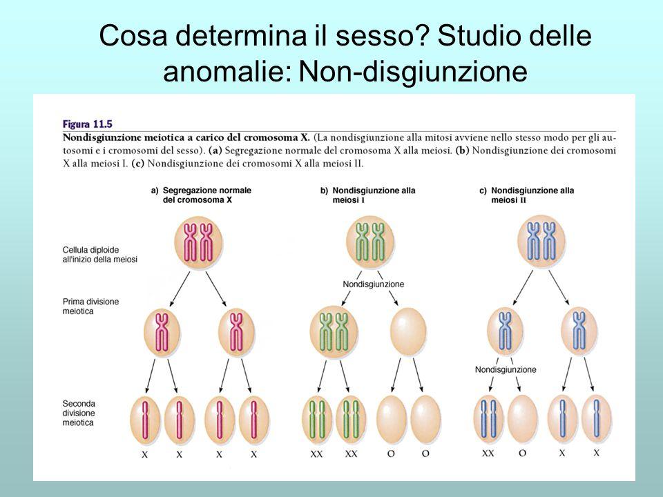 Cosa determina il sesso Studio delle anomalie: Non-disgiunzione