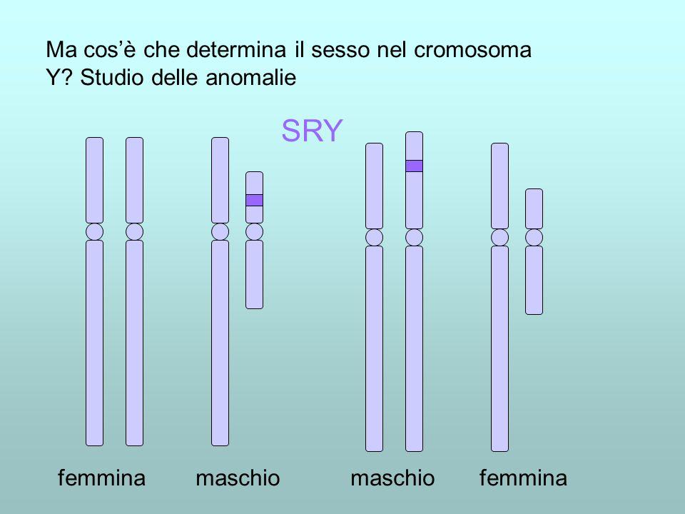 Ma cos'è che determina il sesso nel cromosoma Y Studio delle anomalie