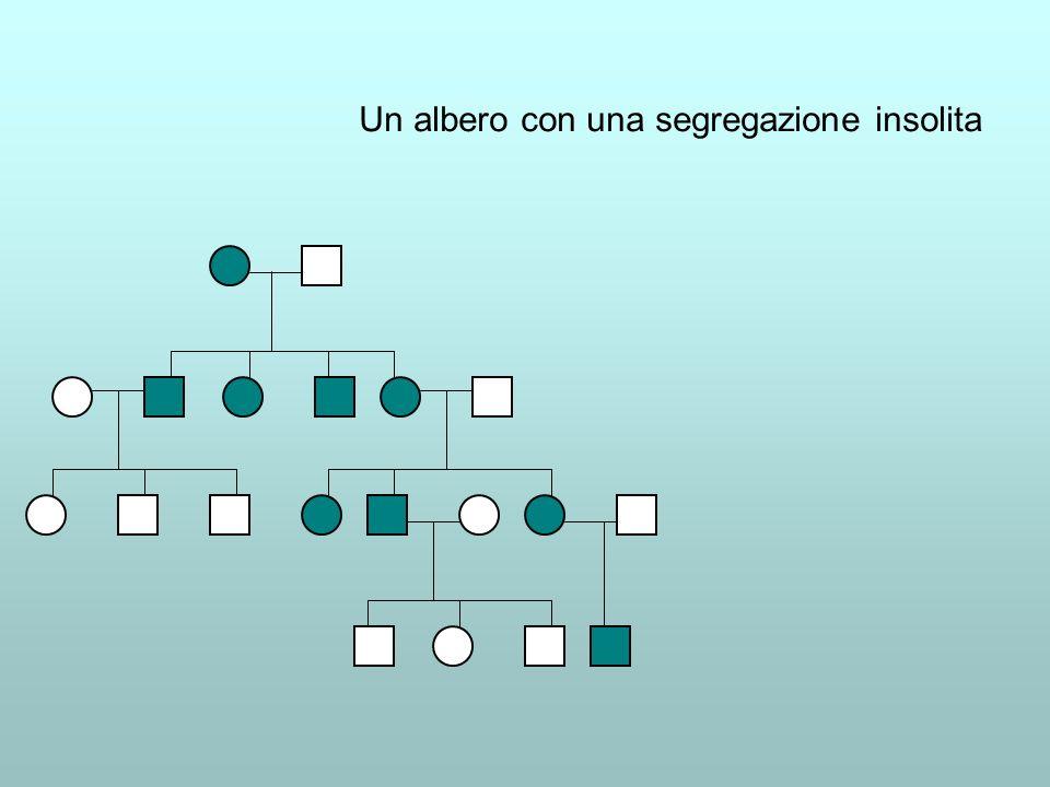 Un albero con una segregazione insolita