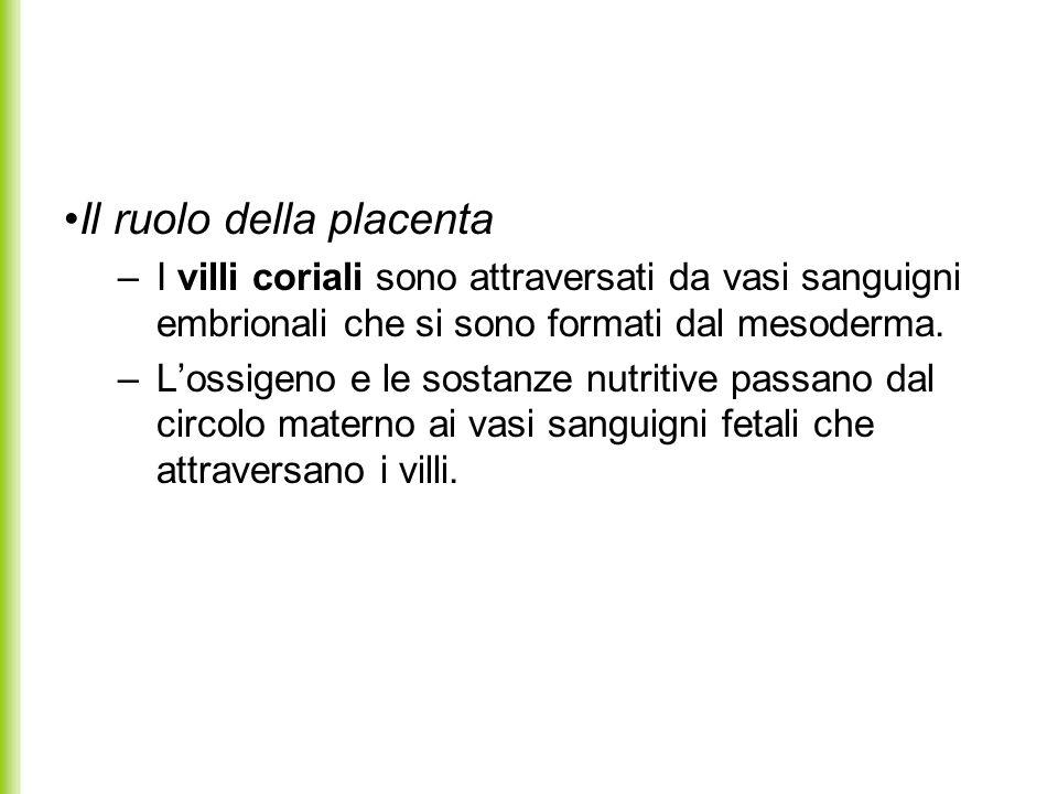 Il ruolo della placenta
