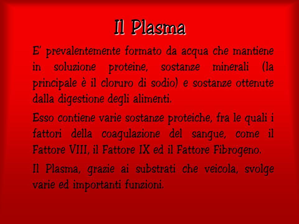 Il Plasma