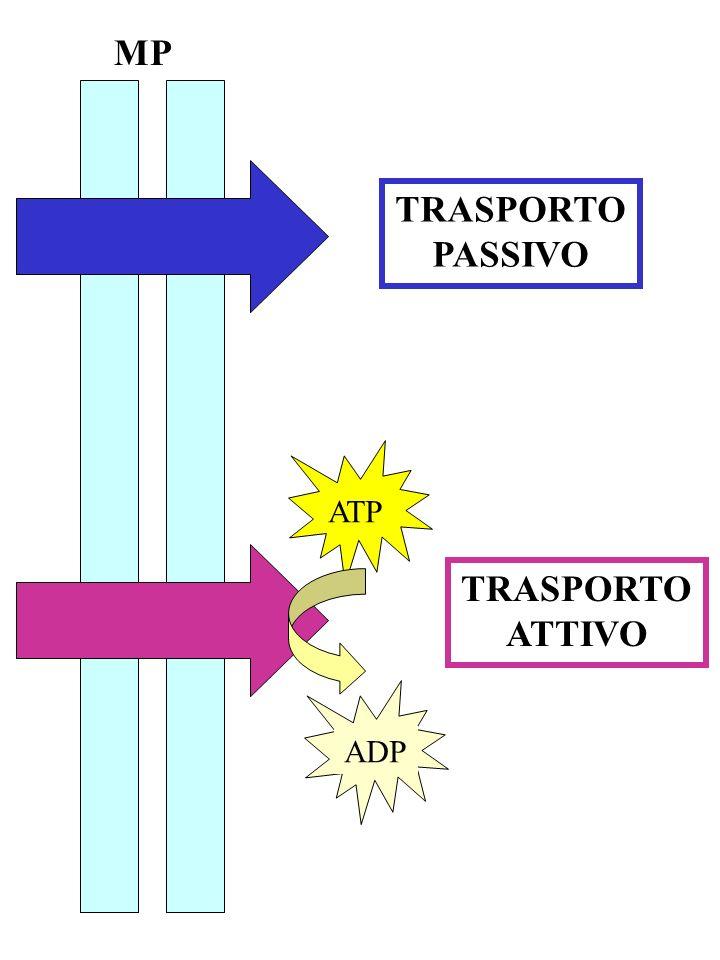 TRASPORTO PASSIVO TRASPORTO ATTIVO