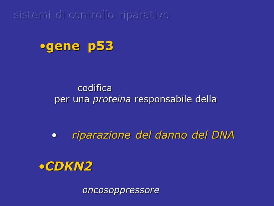 gene p53 CDKN2 sistemi di controllo riparativo codifica