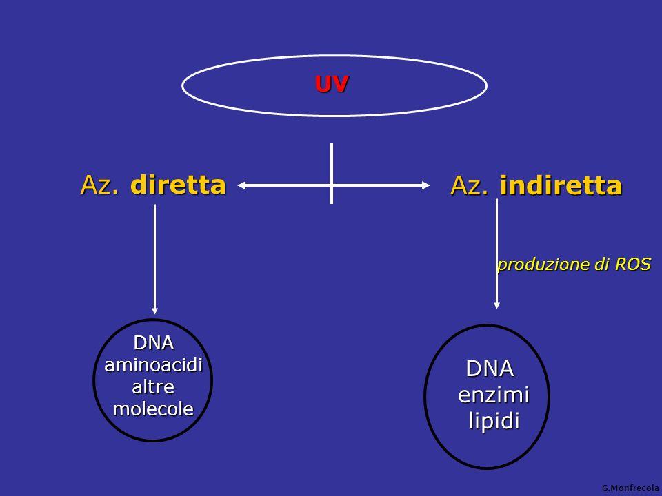 Az. diretta UV Az. indiretta produzione di ROS DNA enzimi lipidi DNA