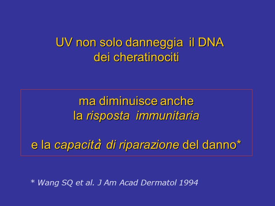UV non solo danneggia il DNA dei cheratinociti ma diminuisce anche la risposta immunitaria e la capacità di riparazione del danno*