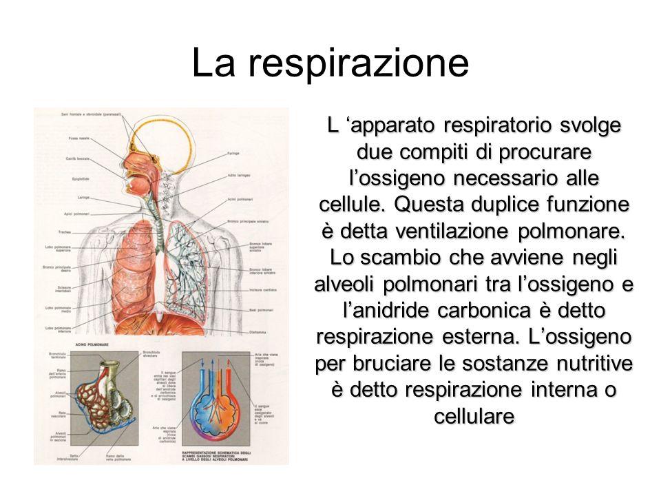 La respirazione