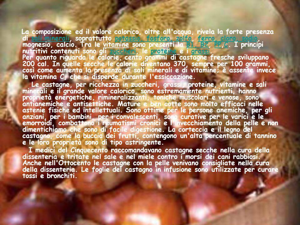 La composizione ed il valore calorico, oltre all acqua, rivela la forte presenza di sali minerali, soprattutto potassio, fosforo, zolfo, ferro, cloro, sodio, magnesio, calcio. Tra le vitamine sono presenti la B1, B2, PP,C. I principi nutritivi contenuti sono gli zuccheri, le proteine e i grassi. Per quanto riguarda le calorie, cento grammi di castagne fresche sviluppano 200 cal. In quelle secche le calorie diventano 370, sempre per 100 grammi, così come aumenta la presenza di sali minerali e di vitamine; è assente invece la vitamina C, che si disperde durante l essiccazione.