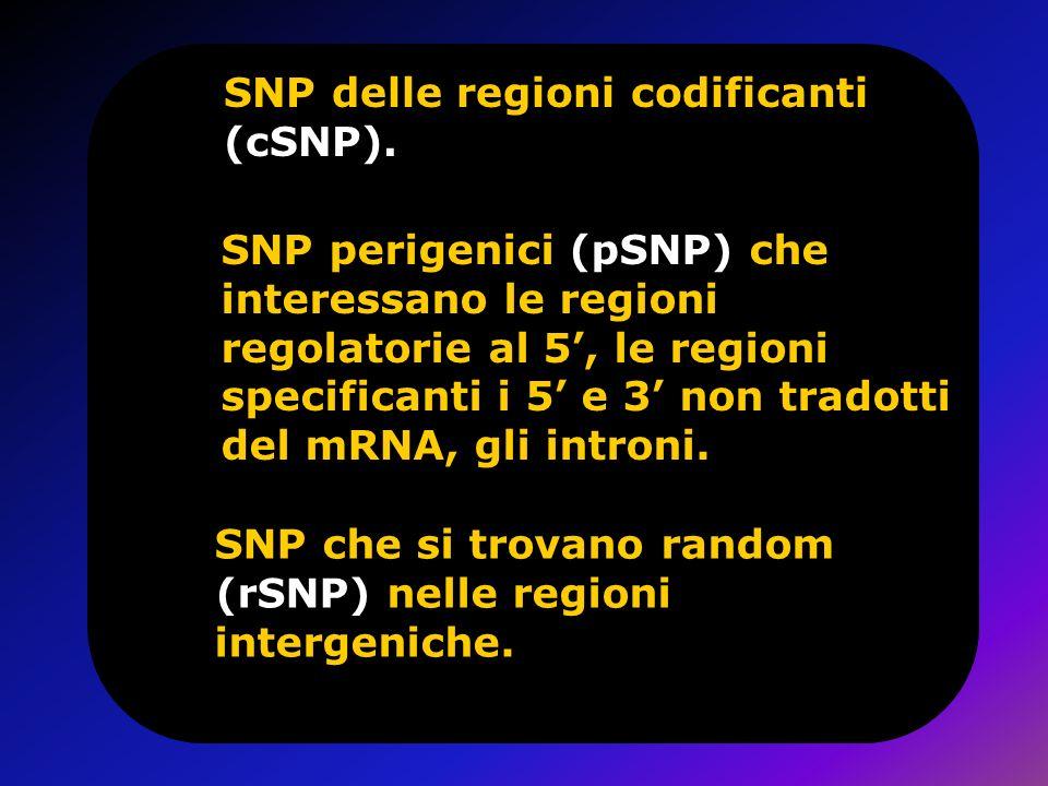 SNP delle regioni codificanti (cSNP).