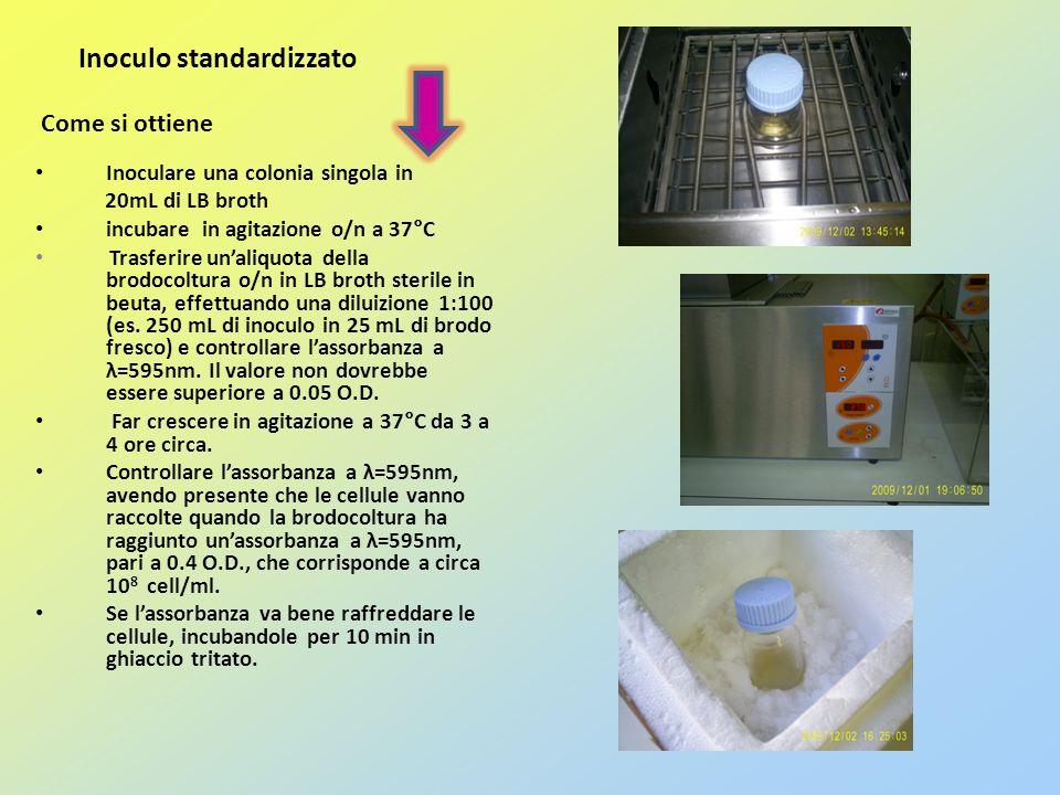 Come si ottiene Inoculo standardizzato