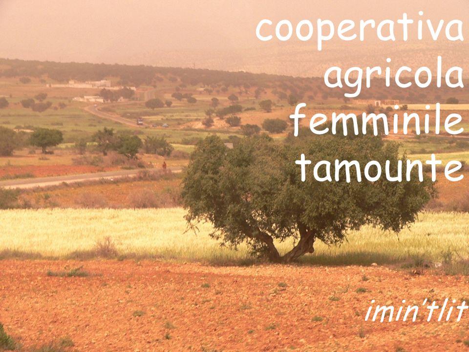 cooperativa agricola femminile tamounte imin'tlit