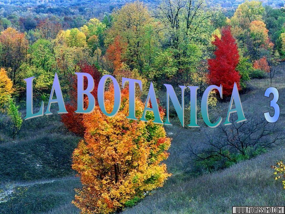 LA BOTANICA 3