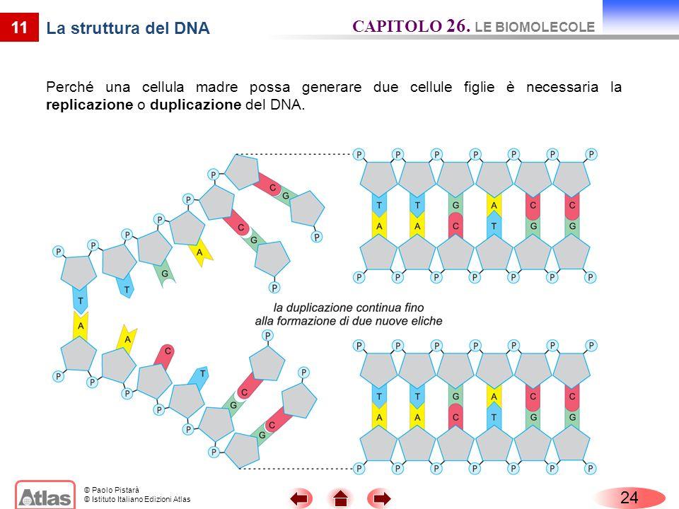 CAPITOLO 26. LE BIOMOLECOLE La struttura del DNA