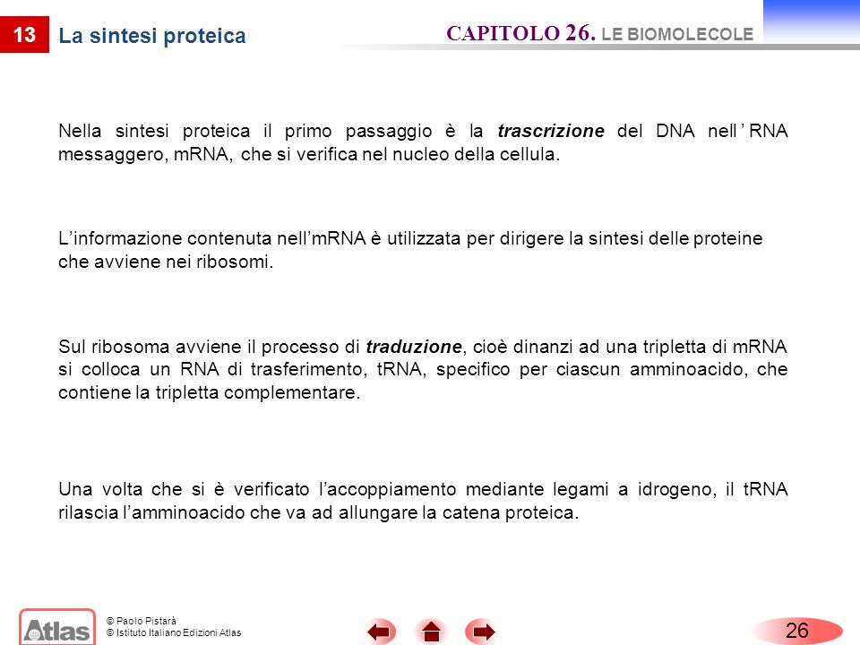 CAPITOLO 26. LE BIOMOLECOLE La sintesi proteica