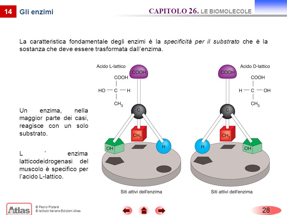 CAPITOLO 26. LE BIOMOLECOLE Gli enzimi