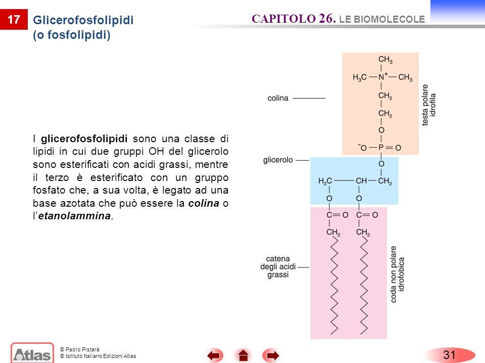 Glicerofosfolipidi (o fosfolipidi)