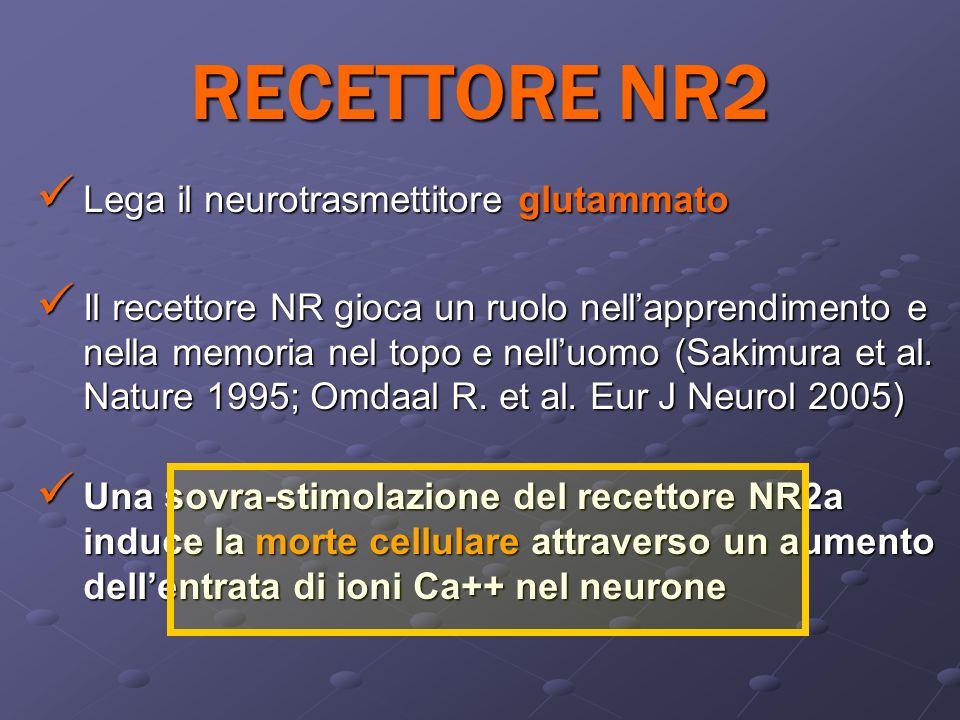 RECETTORE NR2 Lega il neurotrasmettitore glutammato