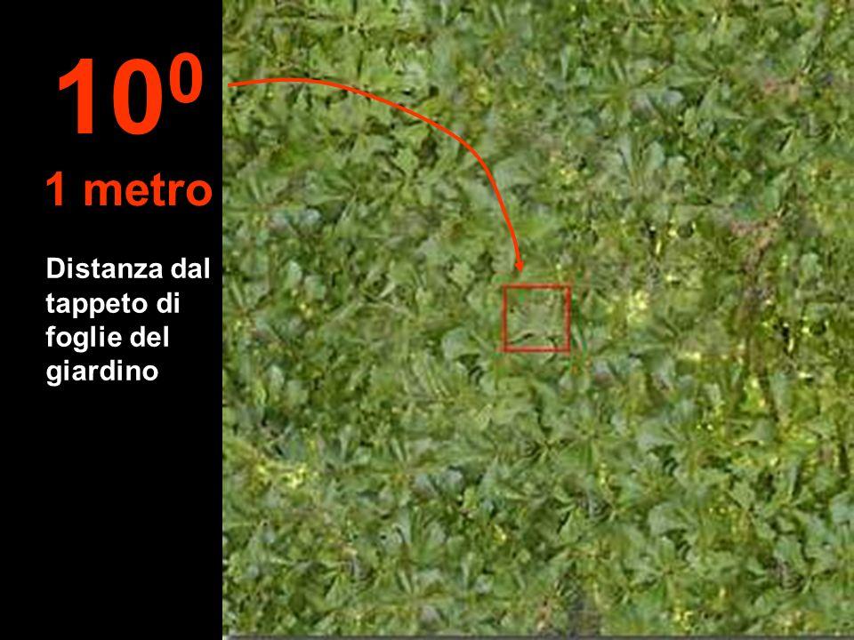 100 1 metro Distanza dal tappeto di foglie del giardino