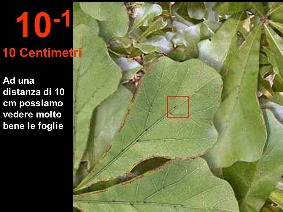 10-1 10 Centimetri Ad una distanza di 10 cm possiamo vedere molto bene le foglie