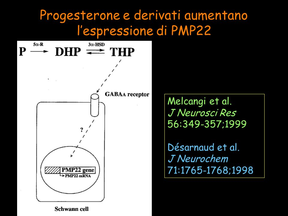 Progesterone e derivati aumentano l'espressione di PMP22