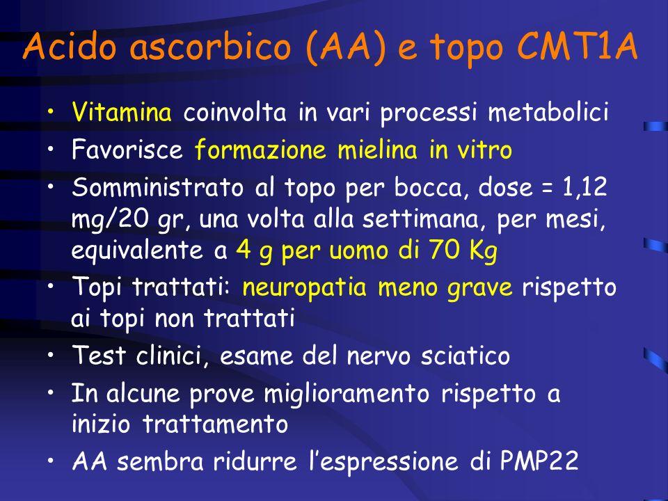 Acido ascorbico (AA) e topo CMT1A
